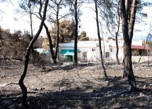 Nel 2007 l'incendio di Peschici (naturamediterranea.com)