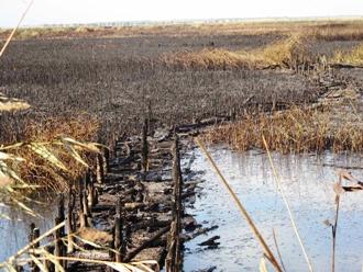 Incendio Oasi WWF lago Salso