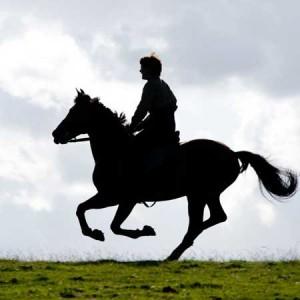 War Horse - Dal film