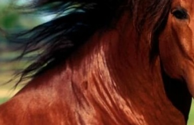 Cavallo (ST) IMMAGINE D'ARCHIVIO