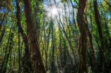 Tra gli alberi di Bosco Quarto (ph: Michele Renzullo)