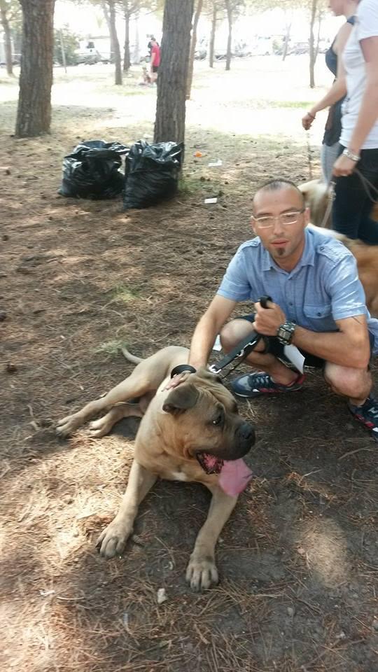 Nicola Bramante proprietario cane 'Becks', razza 'Perr da presa canario' (NB-2015)