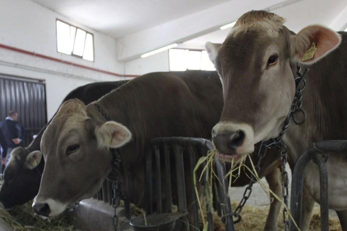fiera agricoltura Foggia, 07.09.2020