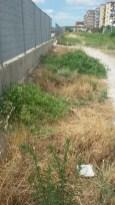 Piante di capperi in zona Parcheggio - Centro Andrea Cesarano