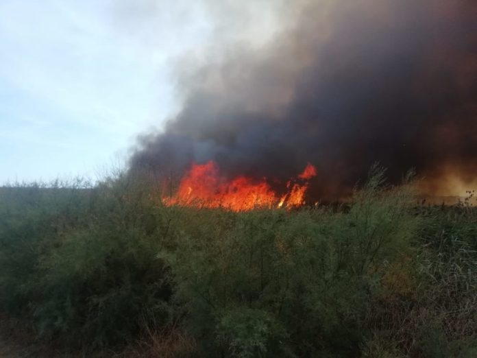 incendio oasi lago salso (mf 15.09.2019)