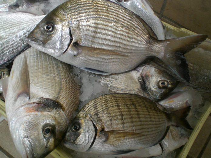 Mercato ittico-Orate e saraghi