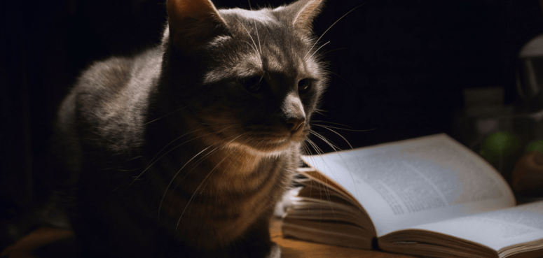 catwithbookfeaturedsize