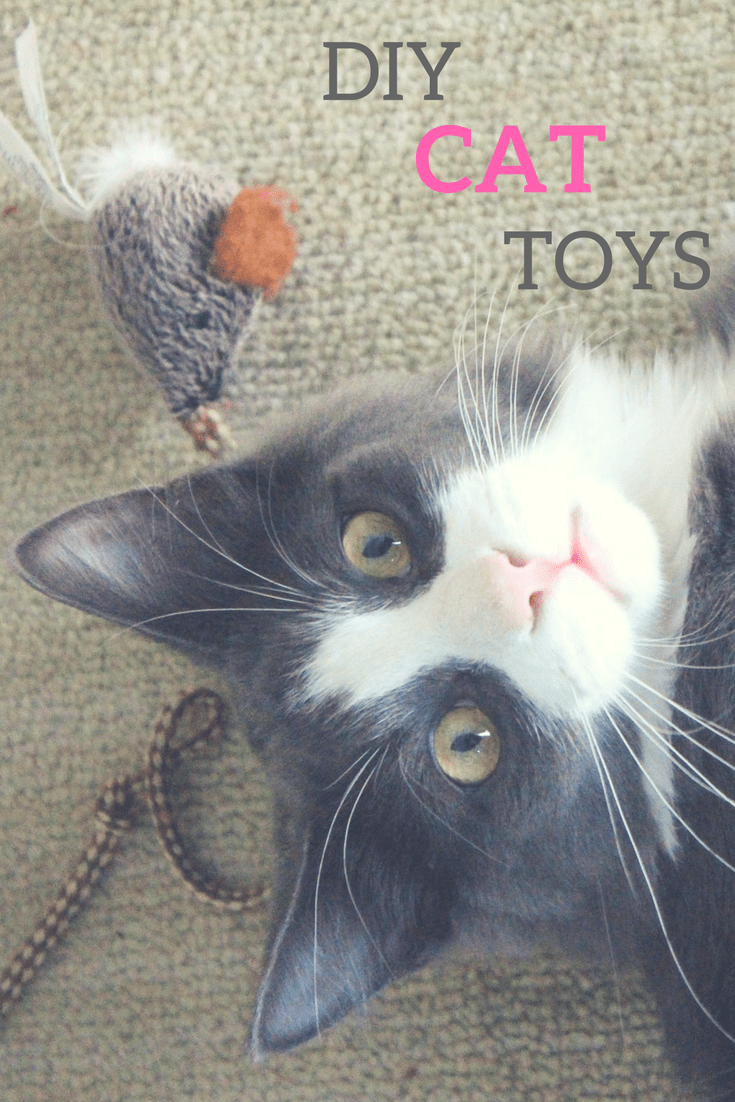 DIY Cat Toys! The guide to the most awesome DIY cat toys on the web!