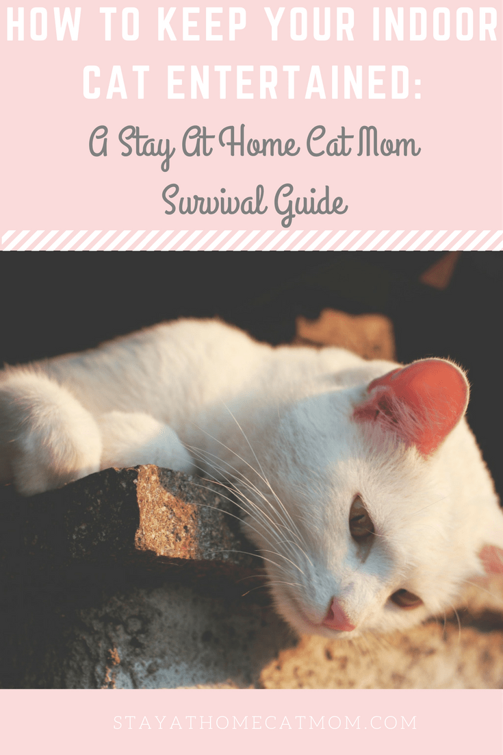 How to keep your indoor cat entertained: A Stay At Home Cat Mom Survival Guide