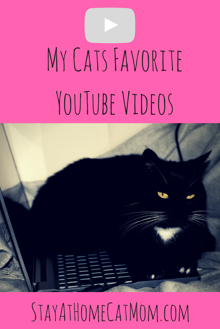 My Cats Favorite YouTube Videos!