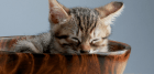Keep indoor cats entertained - A cat mom survival guide