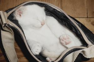 Stay at home cat mom cat bag