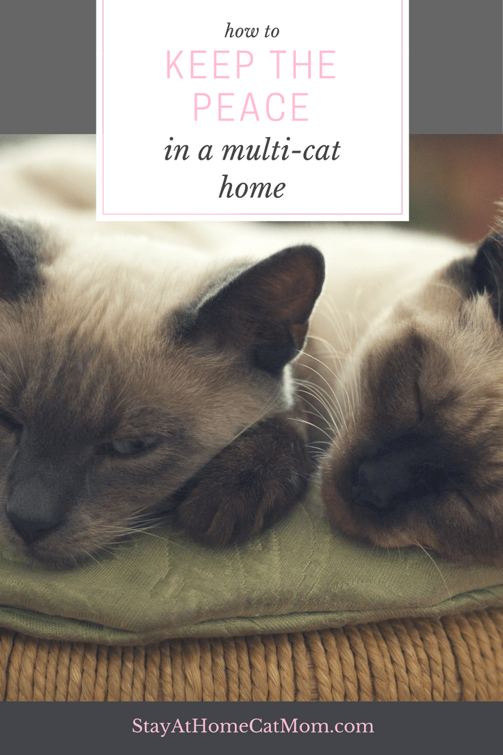 How to keep the peace in a multi-cat home!
