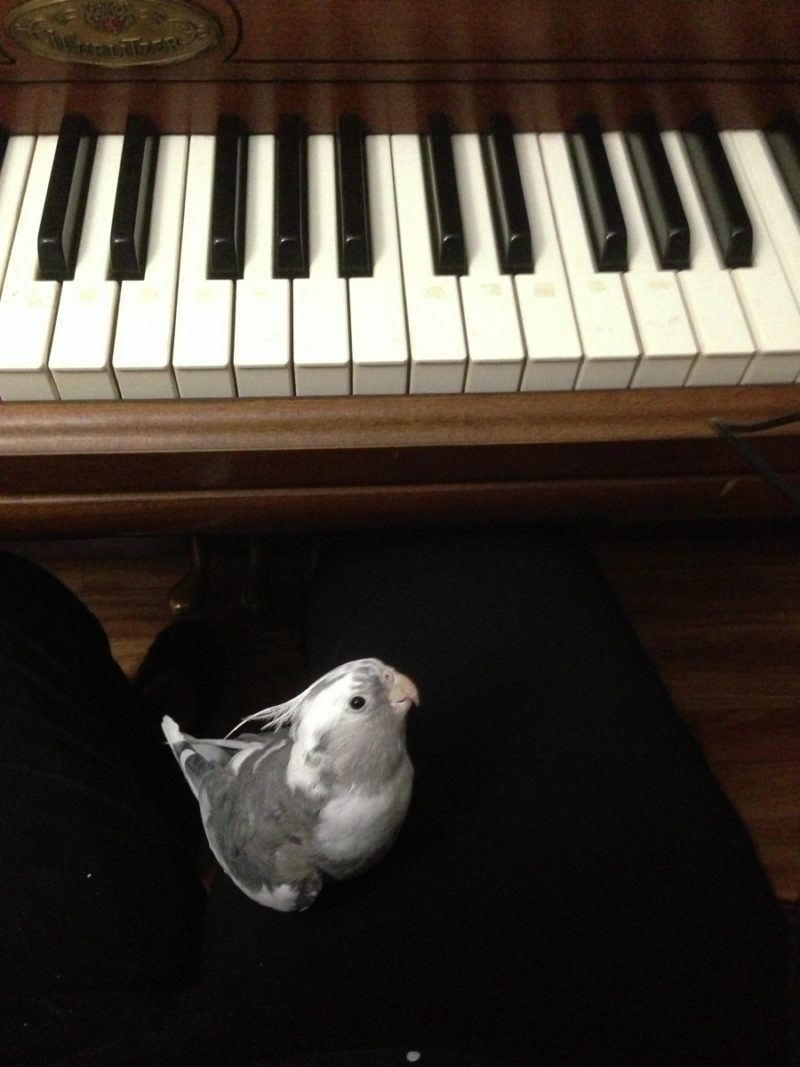 Celebrating the anniversary of our first pet Cosmo the cockatiel. | Stay gold Autumn