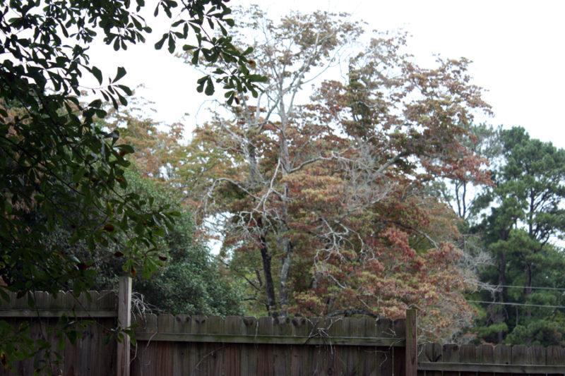 Hello fall! A little bit about my favorite season   Stay gold Autumn