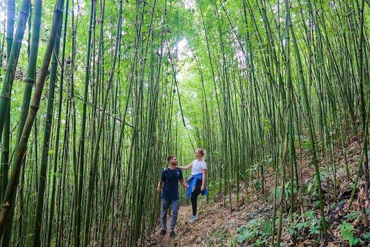 Bamboo Forrest, Sapa, Vietnam | Hiking & Trekking | Stay Lost