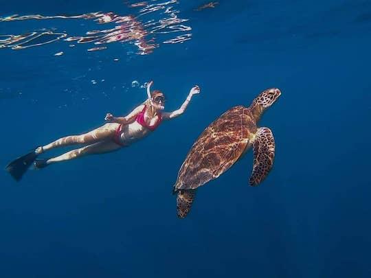 Turtle Gili Islands, Indonesia   Snorkelling Adventures   Stay Lost