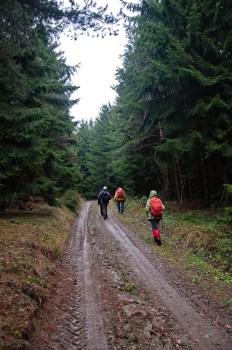 Solidni šumski putevi