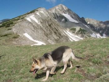 Verni pratilac planinara na usponima
