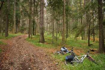 U šumama Golije