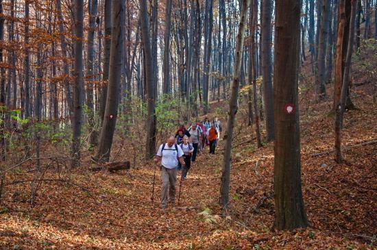 Staza ka Ježevcu kroz Bukovu šumu