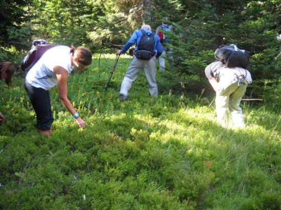 Planinari u berbi borovnica