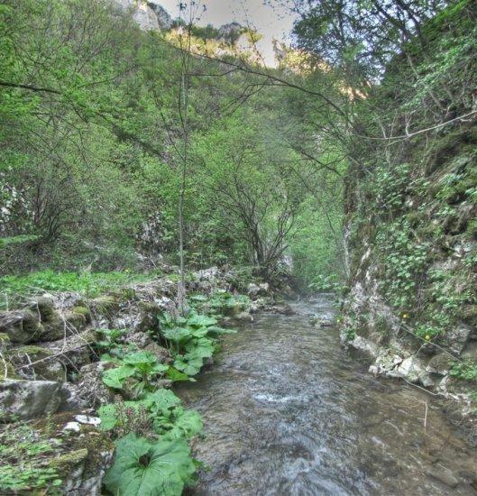 U kanjonu Crne reke
