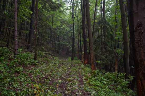 Pod gustim krošnjama šume Trest