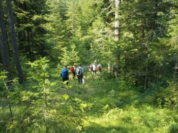 Uspon kroz šumu Krčanika