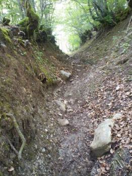 Uspon stazom kroz šumarke