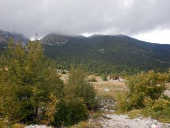 3_Medved_04-10-2015