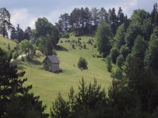 Jelova gora320