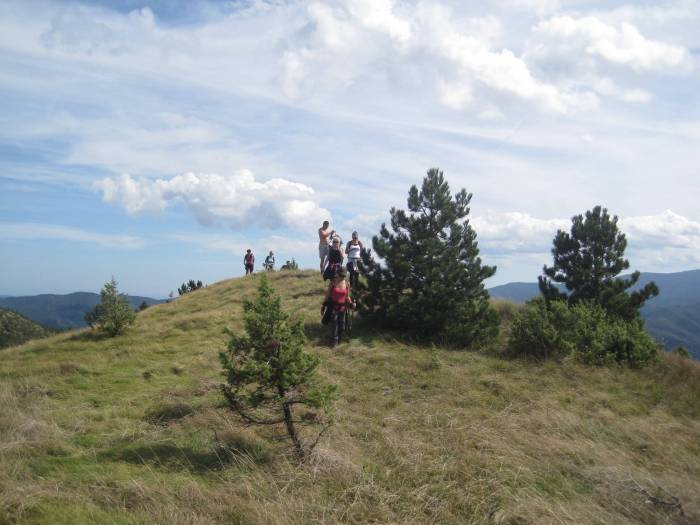 Vrh Orlovac