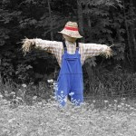 A scarecrow in the farmers field. - St. Clare Heirloom Seeds