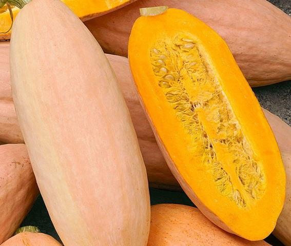 Winter Squash - Pink Banana Jumbo - St. Clare Heirloom Seeds