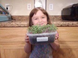 Step by Step Guide to Growing Fabulous Microgreens - St. Clare Heirloom Seeds