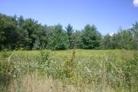 Site of proposed Tiller/Zavoral mine (photo by Lisa Schlingerman, T.A.-C.O.S.)