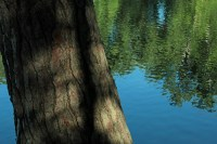 Pine and water