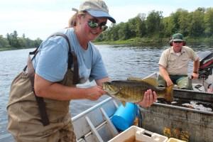 St. Croix River fish sampling smallmouth bass