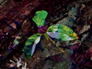 Purple Trillium, by Laurie Rockne