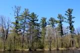 Pine picket