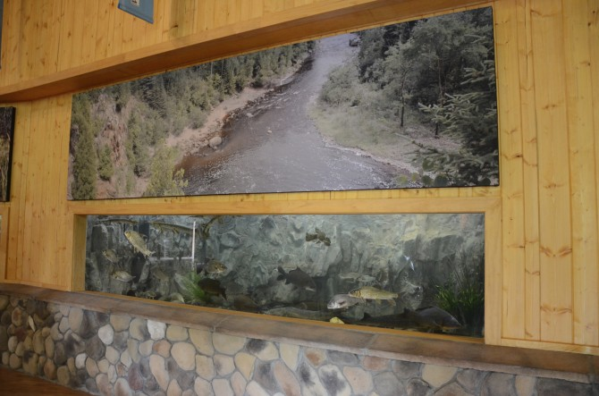 St. Croix River fish tank at the Minnesota State Fair, photo courtesy MN DNR