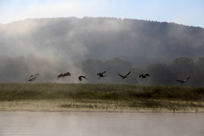 Sandhill cranes at sunrise on the St. Croix Islands Wildlife Area near Somerset
