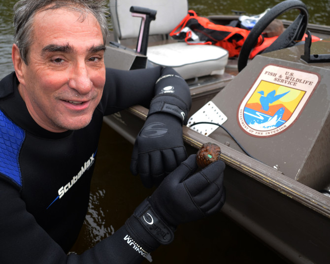 U.S. Fish and Wildlife Service Midwest Regional Director, Tom Melius, holds up an endangered winged mapleleaf mussel. The mussel was found during a routine check of underwater lines in the St. Croix River.
