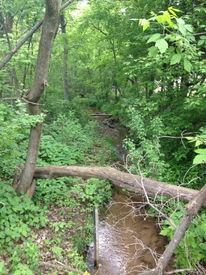 Kelle's Creek, looking upstream from St. Croix Trail