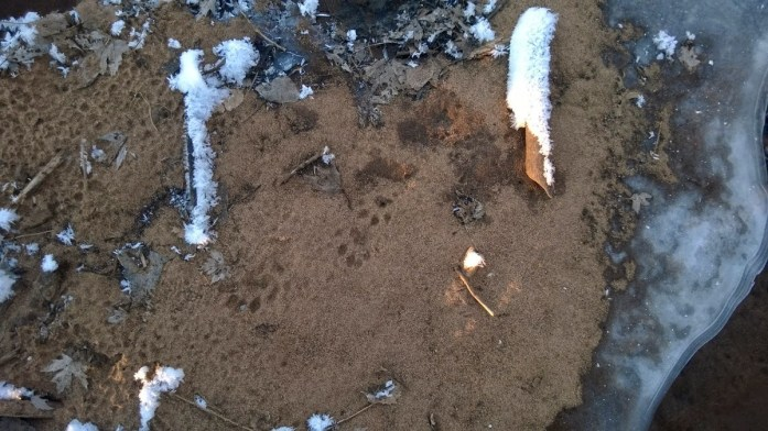 Otter tracks and ice, Saint Croix River
