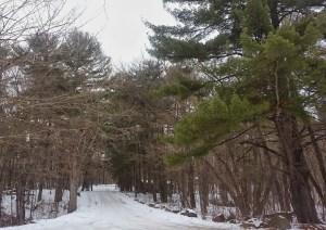 Log House Landing Road