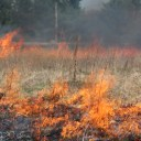 A prescribed prairie burn.