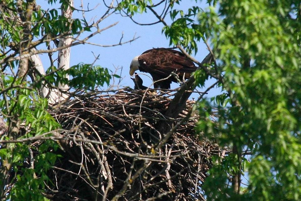 bald-eagle-nest-wrsp