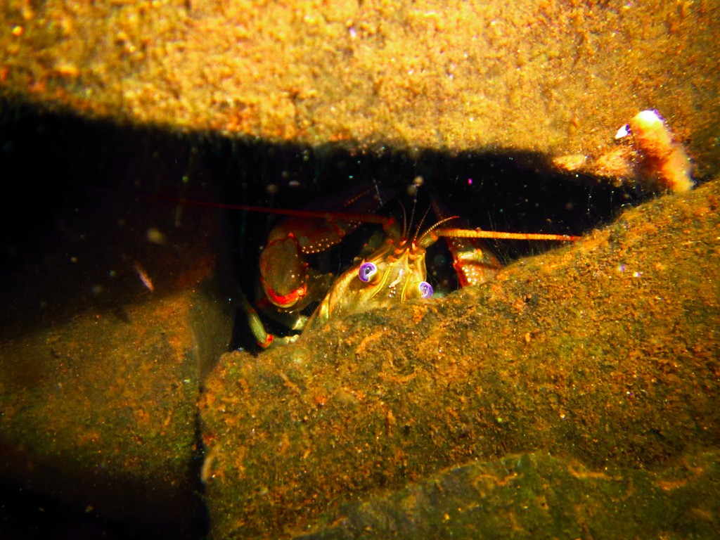 crayfish-jaden